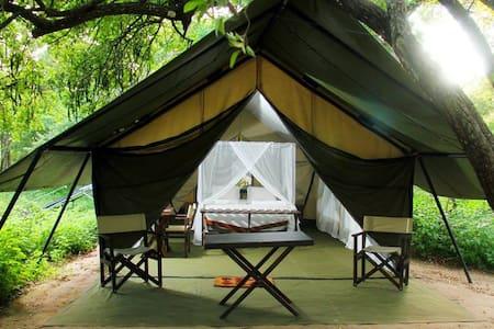 Yala Safari Camping - Tält