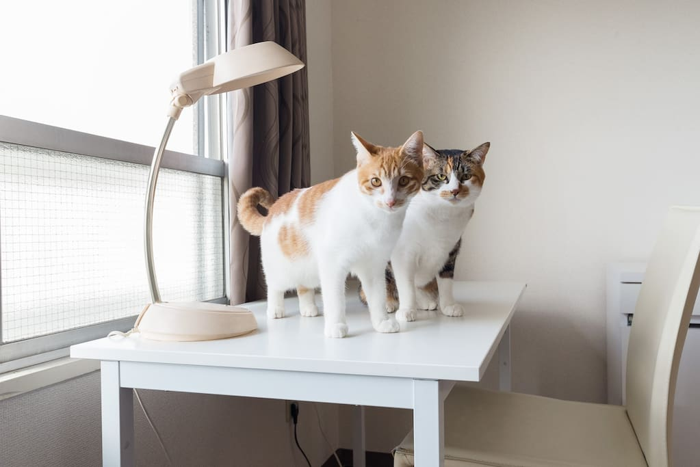 "Welcome to our apartments. We are ""The Japanese cats"" .   Call me MARON! and CHAKO!   We are also your host family. Please let us play with you."