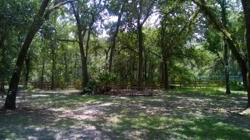 Picnic/BBQ Area in the Park