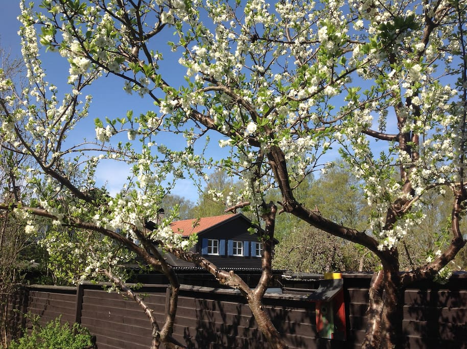 Garden, May