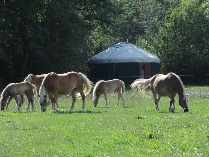 Yourte confortable au calme au coeur des chevaux