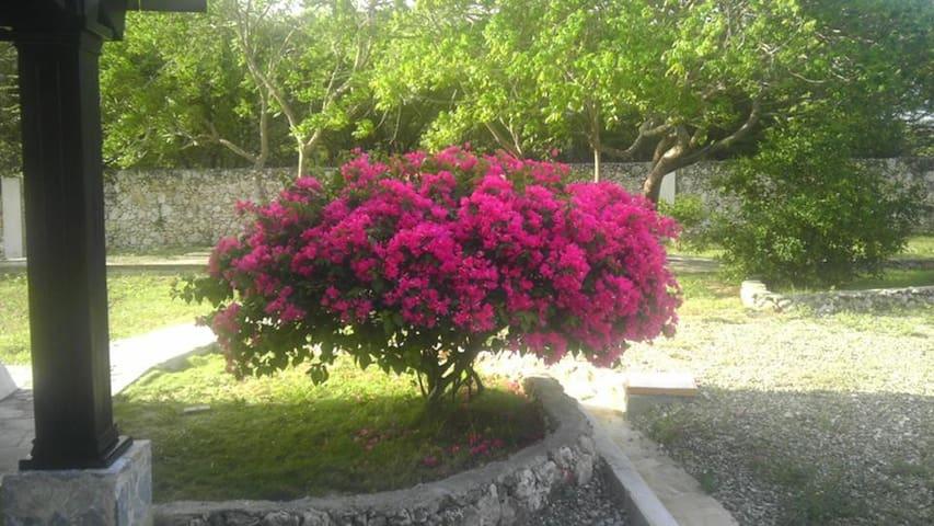 Villas Gemelas Camera n 7 - La Isabela - Wikt i opierunek