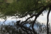 Einer der Teiche im Park