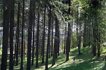 Mt Tabor Park has miles of beautiful hiking trails.