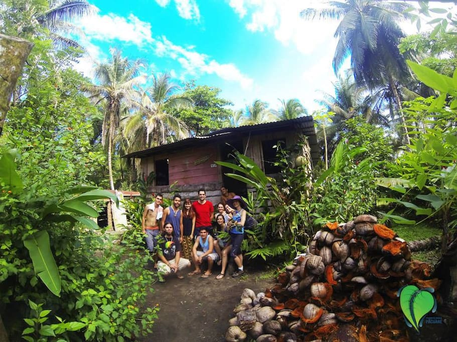 What a gem to find a quaint little cabin in the jungle-- on the beach and all made from coconut trees!