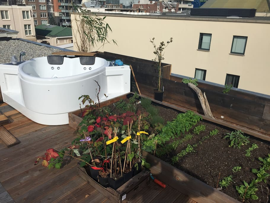 Fresh veggies and a jacuzzi right on the roof