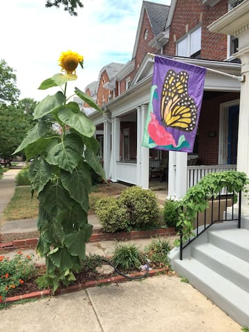 Can you believe this sunflower grew on its own from LAST year's scrawny plantings?! 2014