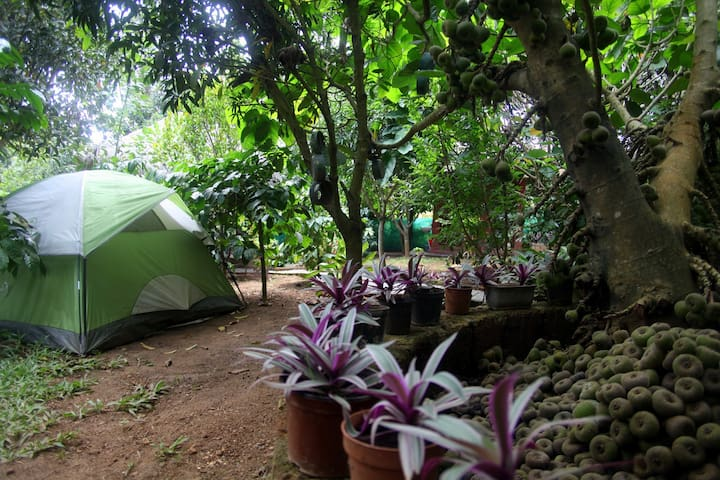 For Groups!! Campstay in a fruit orchard! - Kushalnagar - Aamiaismajoitus
