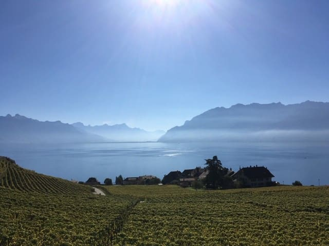 Vevey Montreux Lausanne : Room Lavaux for ever !