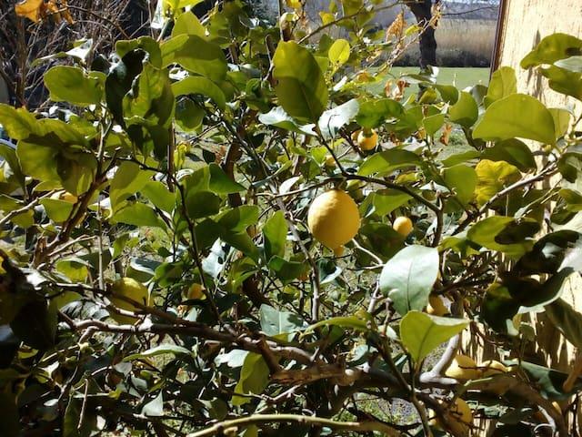 Appartamento limone - grosseto - House