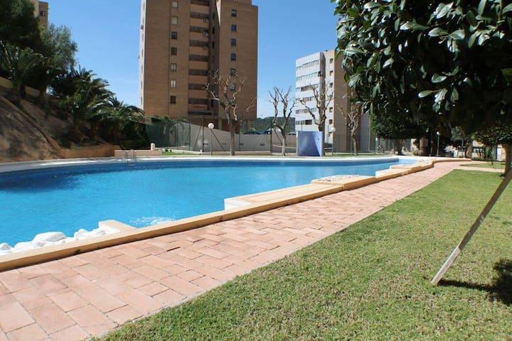 piscina / swimming pool / piscine