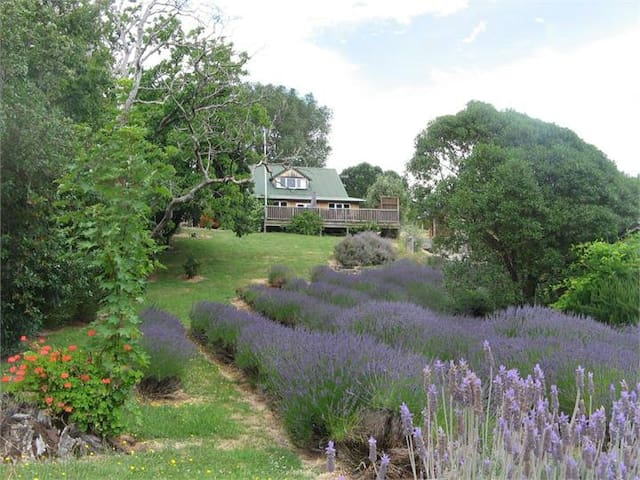 Tranquil and relaxing Lavender Studio