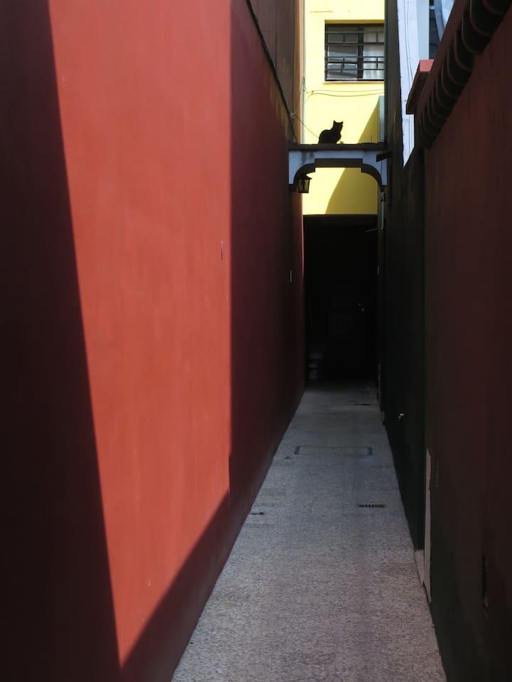 Casa de pasillo, la que te recibe es Mirtha, mi gata