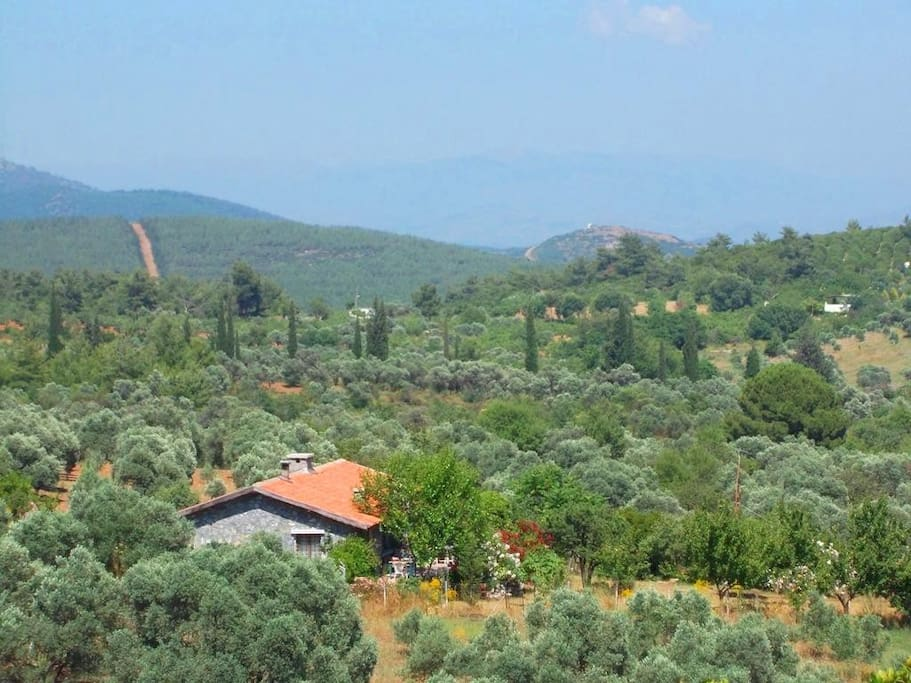 The guesthouse on the mountainslope with olive trees and the forrest behind it.
