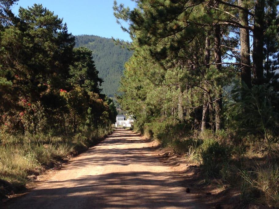 Road to Buffelsdam