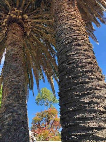 网红百年爱情大铁树,记得在树下留个影哟