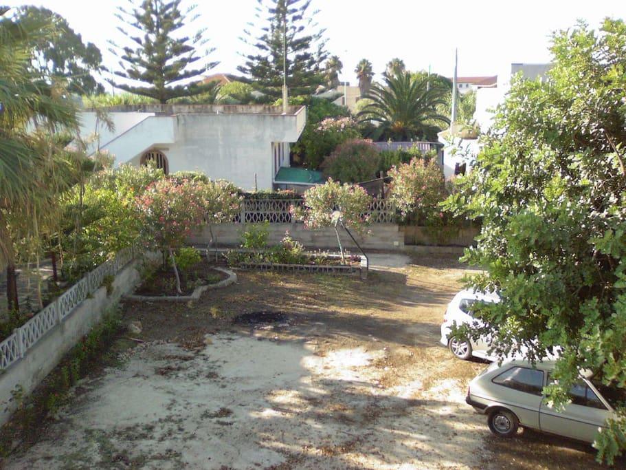 Carrubi della villetta e i pini di riferimento appartenenti ad altra proprietà