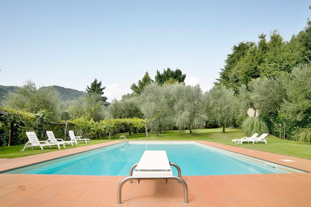 pool surrounded by olive trees and vineyards