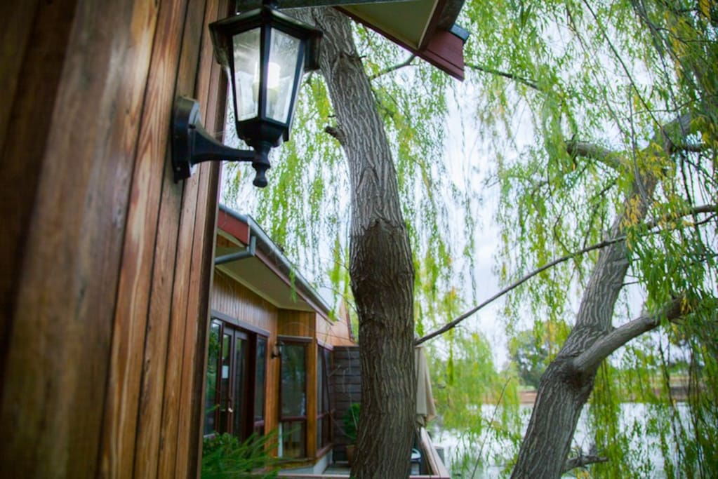 Willow trees on your deck