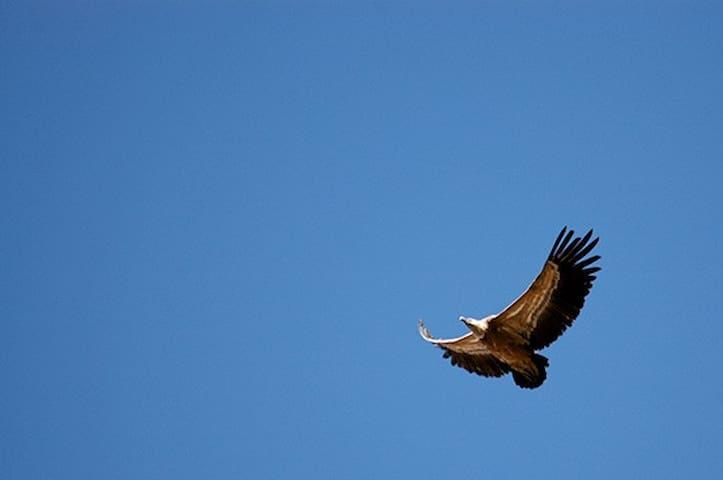 Lugar visitado por ornitologos de todo el mundo