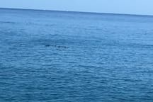 Dolphins coming up to the house