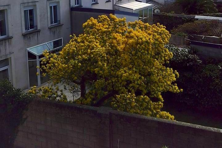 Chambre calme en centre-ville - Cherbourg-Octeville - Apartamento