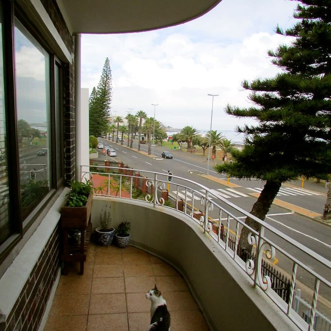 Our large balcony overlooking the Sea Point promenade and ocean beyond (and our gorgeous cat, Mosey)