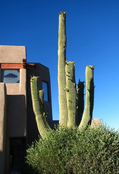 Fabulous Luxury Home on 2 ac Tucson