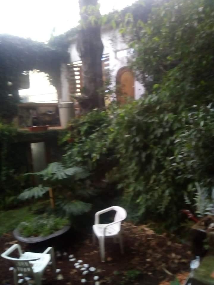 Espacio con clima de bosque en el centro de Xalapa