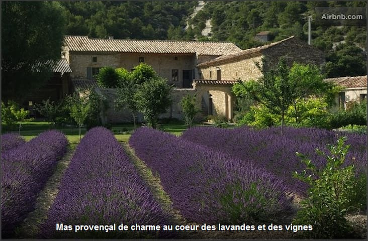 A B&B in lavender fields - Le Pègue - Inap sarapan