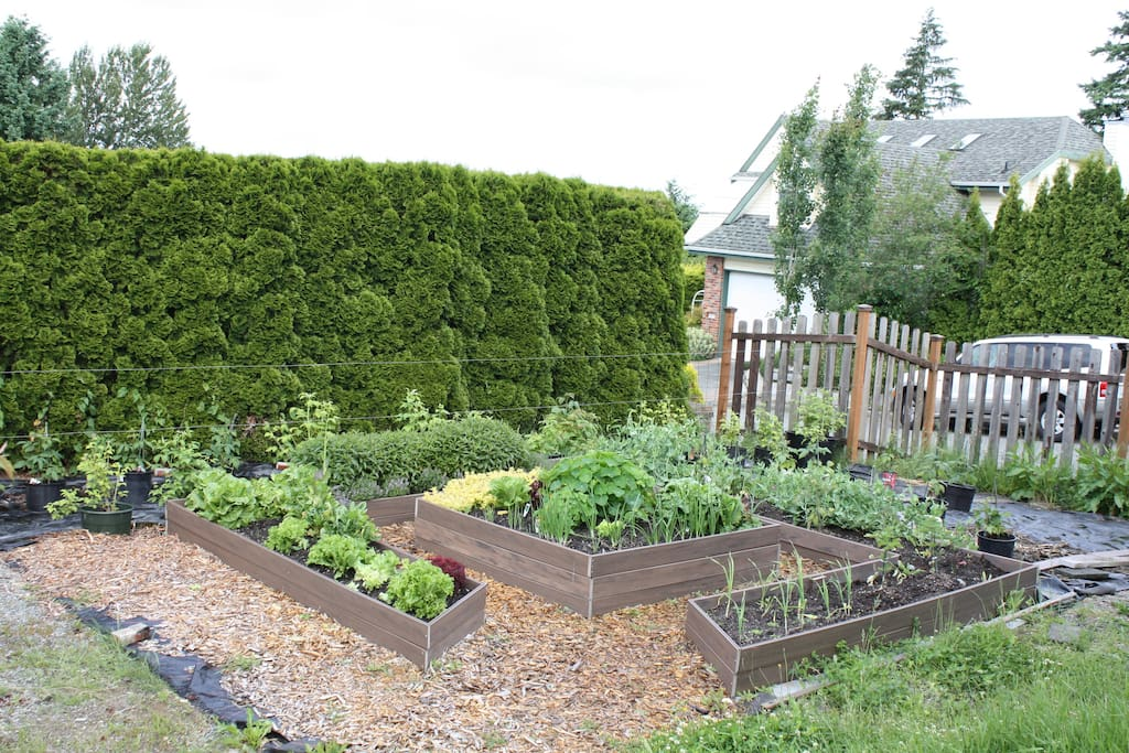 Lower vegetable salad garden