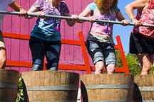 Get your stomp on at  The Wine & Harvest Festival in September .  It books up fast.