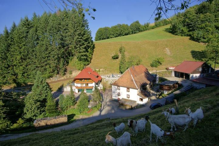 Steinmühle: Schwarzwald hautnah!