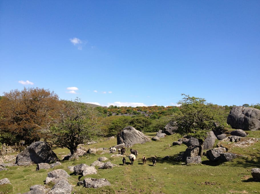 Dartmoor on your doorstep!