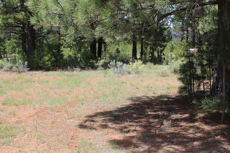 Remote Campsite - Zelt