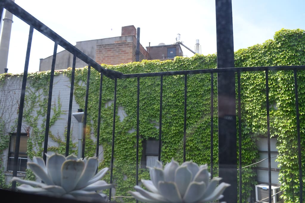 View out the windows of ivy-covered wall, serene and no street noise.