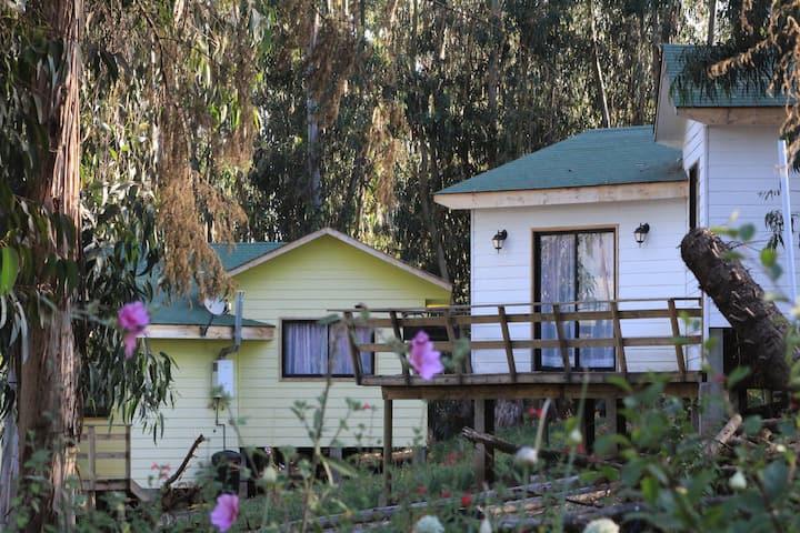 Cabaña Bosques del Rungue 3