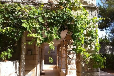 Ramat Eshkol/ Givat Hamivtar  - Jerusalem - 公寓