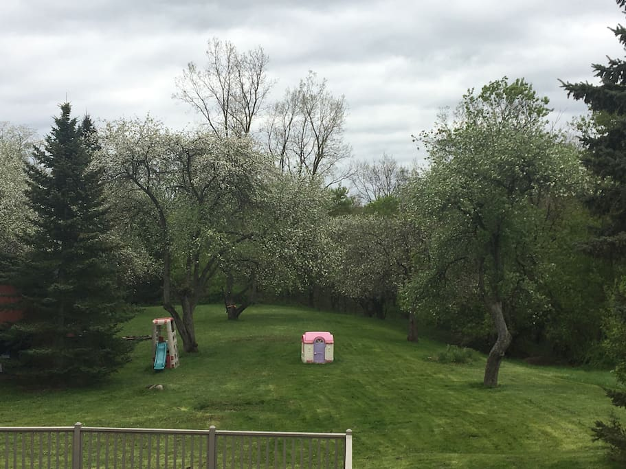 Over one acre of land filled with apple trees, and nature.