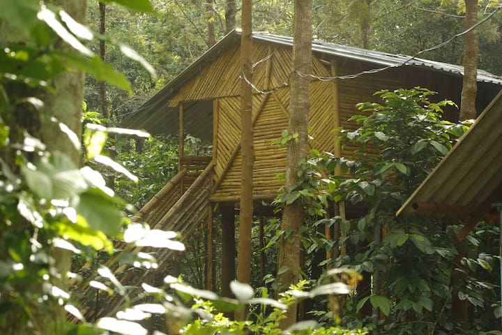 Tree House at Mudumalai Bandipur