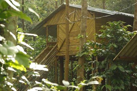 Tree House at Mudumalai Bandipur