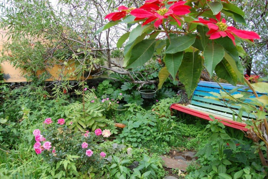 un espacio en el jardín vistas al mar