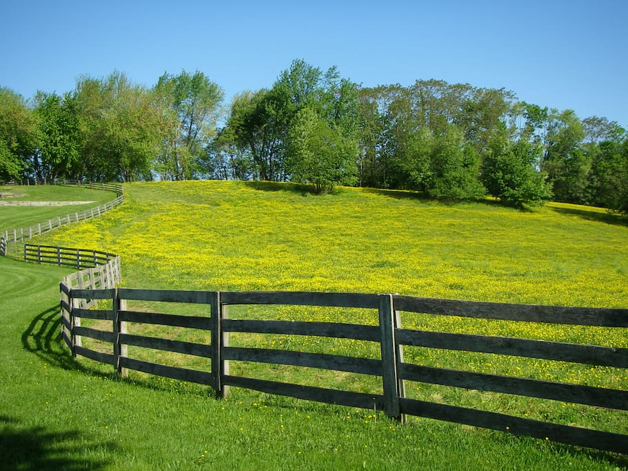 One of several rolling pastures.