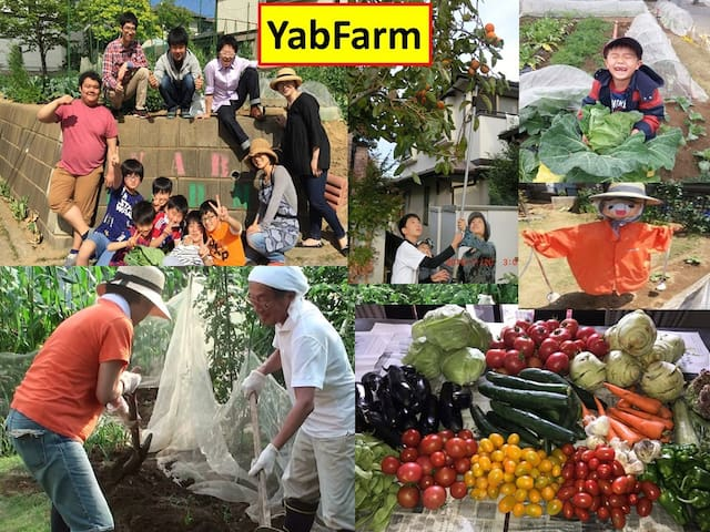 Guests can experience growing and harvesting vegetables in YabFarm. (Charged)