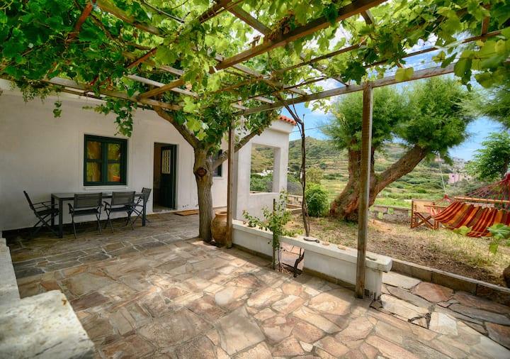 The small vineyard of Faros