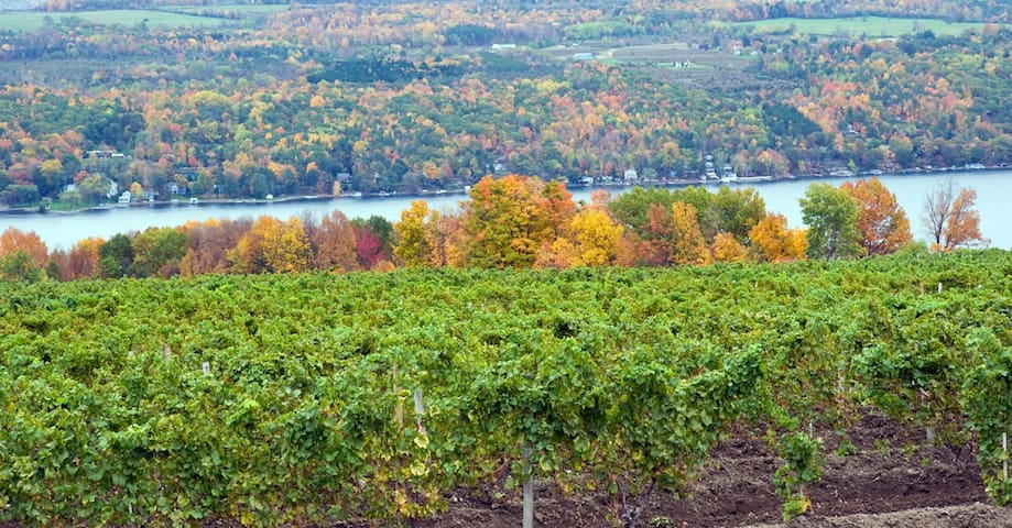 Fall Winery overlooking Cayuga Lake
