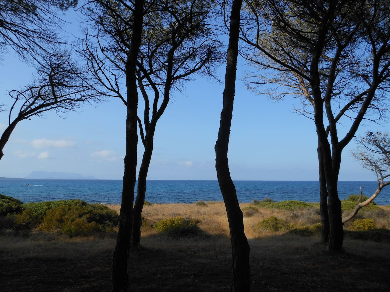 Local beach and pine forest.