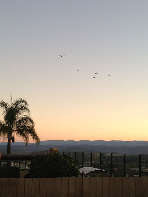 Look at the birds flying to their nests while enjoying a relaxing evening..