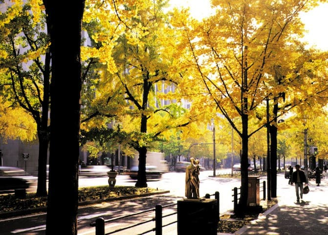 Autumn leaves view