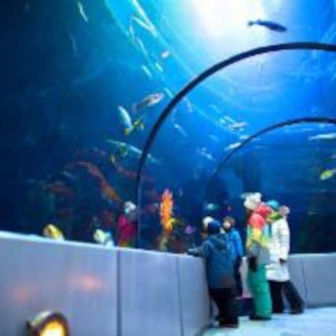 C'est l'aquarium de Québec à 5 min. de la maison.